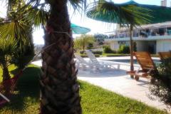 zwembad+palm